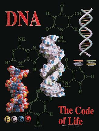 [ What is DNA? >>>]